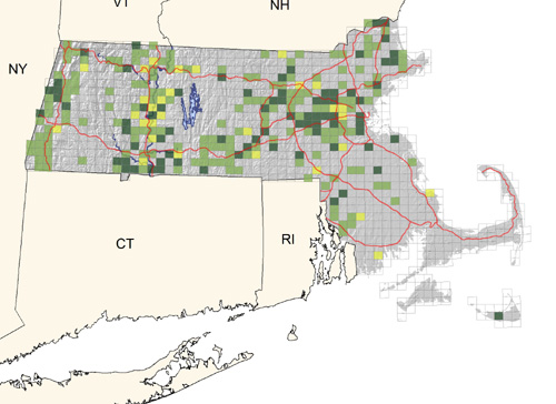 locally common along major watercourses, less common elsewhere; virtually absent on southeastern coastal plain