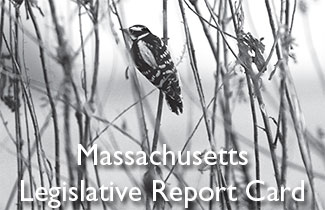 MA Legislative Report Card cover