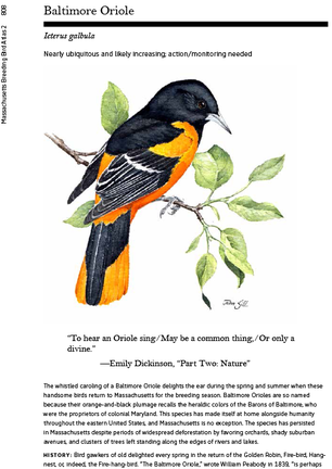 Massachusetts Breeding Bird Atlas 2 pg. 808 baltimore oriole
