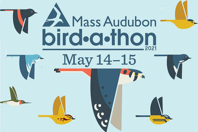 Bird-a-thon 2021 promo with various bird illustrations