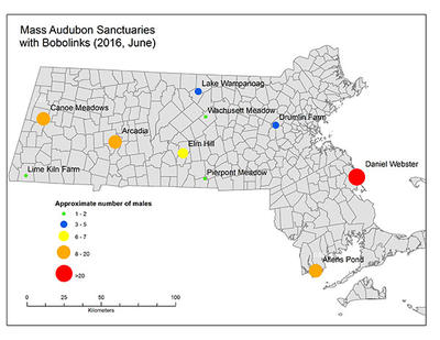 Mass Audubon wildlife sanctuaries with Bobolinks