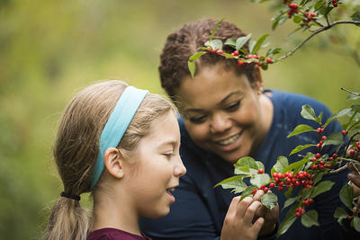 Girl examining a holly bush with her mom