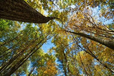Looking up at a tree canopy in autumn