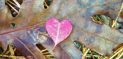 Closeup of a heart-shaped fall leaf © Andrew McManus