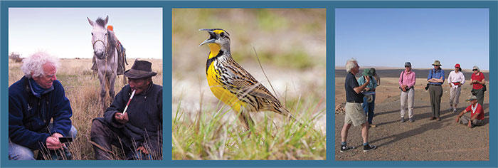 For Birds Forever campaign banner, Meadowlark © Phil Brown