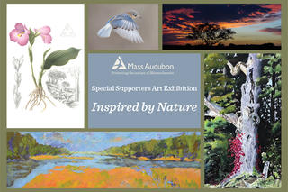 Inspired by Nature LF exhibition poster