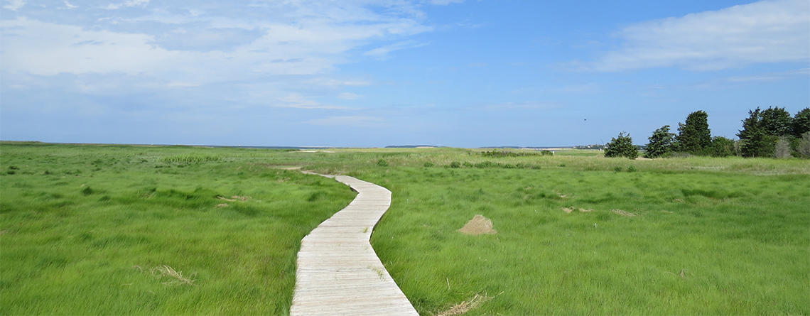 Marsh boardwalk at Wellfleet Bay © Victoria Bettuelli