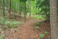 Macdowell Trail on land donated by Carroll School