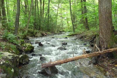 Paucatuck Brook at Bear Hole property