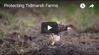 Protecting Tidmarsh Farms video