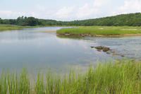 Salt marsh at Great Neck Wildlife Sanctuary
