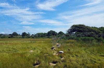 Salt marsh on Angelica Russell's protected land