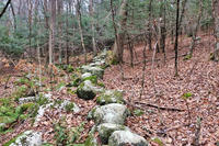 A mossy stone wall on the protected 60-acre Poitras property