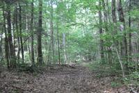 A trail on the newly protected Carver property in Lenox