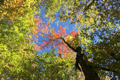 View of fall foliage and sky at Whetstone Wood