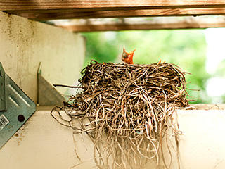 Animals' Homes, Birds' Nests - for Kids - YouTube