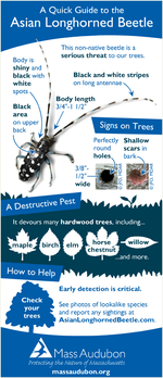 Asian longhorned beetle quick guide