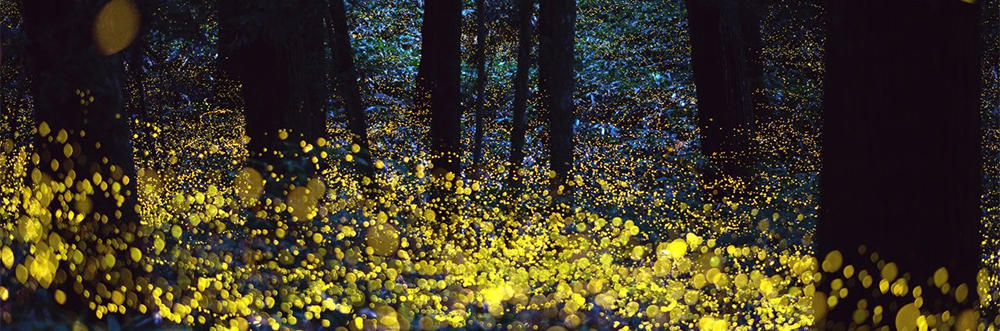 Fireflies © Rel Ohara (CC BY 2.0) via Flickr