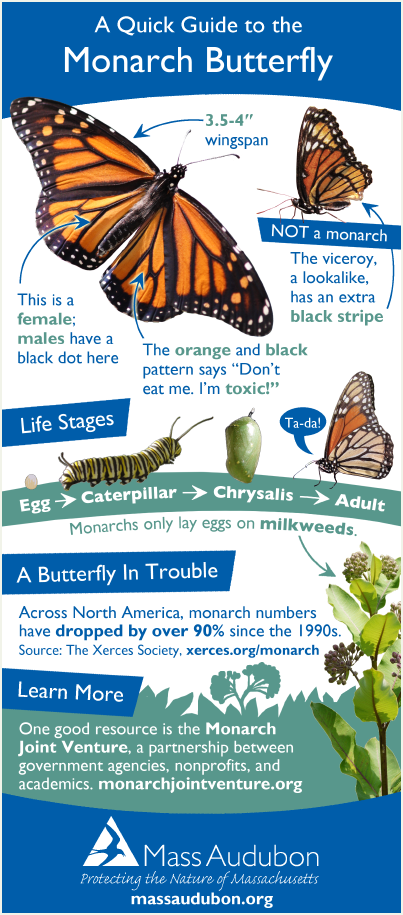 Monarch butterfly quick guide
