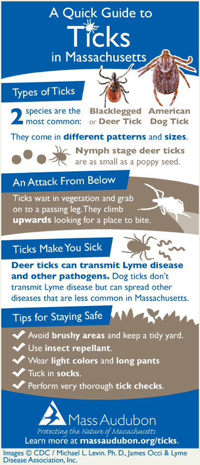 Ticks Quick Guide