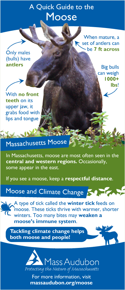 Moose Quick Guide