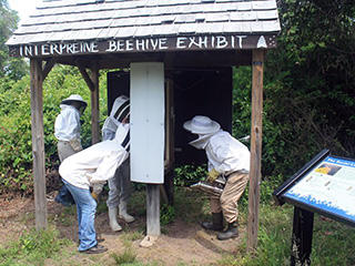 Beehive exhibit at Long Pasture Wildlife Sanctuary