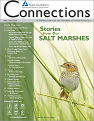 Connections Magazine Spring 2015