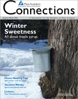 Mass Audubon Connection Magazine Winter 2016
