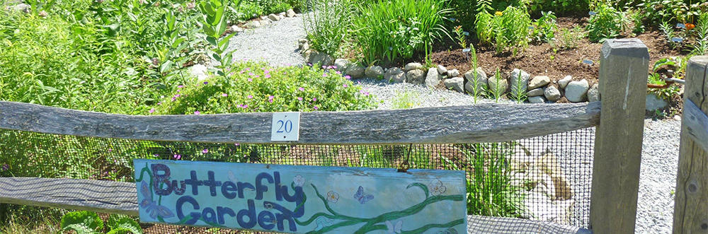 Butterfly Garden at Stony Brook