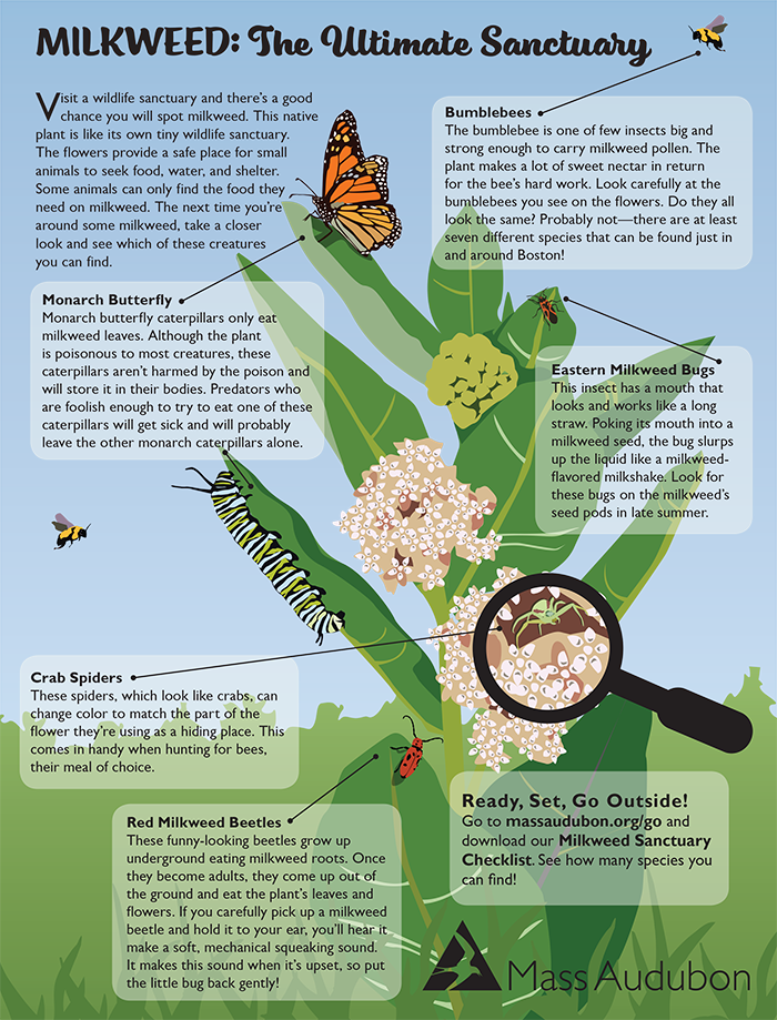 Milkweed Sanctuary Activity Page image