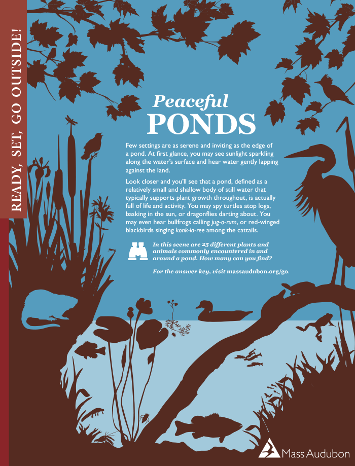 Ponds Activity Page, from Mass Audubon Connections