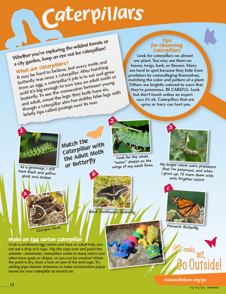 Caterpillars activity page from Mass Audubon Connections Magazine