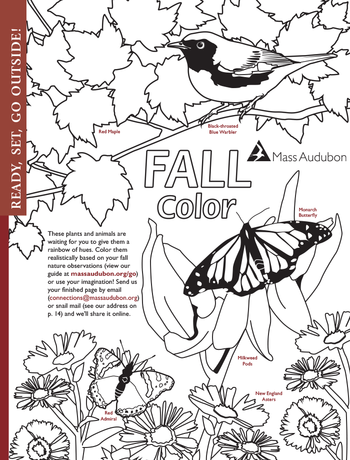 fall color activity page - Color Activity
