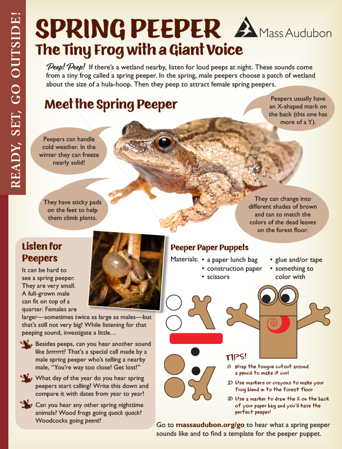 Spring peepers activity page from Mass Audubon Connections Magazine