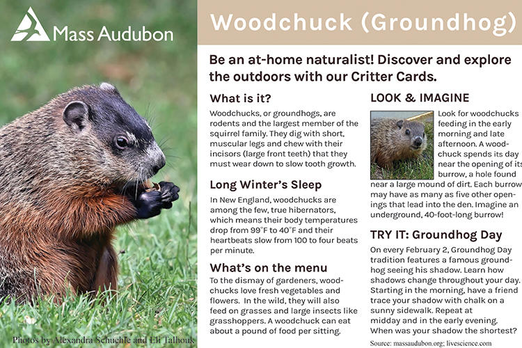 Critter Card — Woodchuck