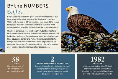 By the Numbers - Bald Eagles