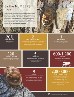 By the Numbers - Bats
