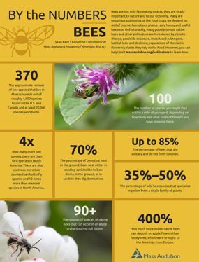 By The Numbers - Bees