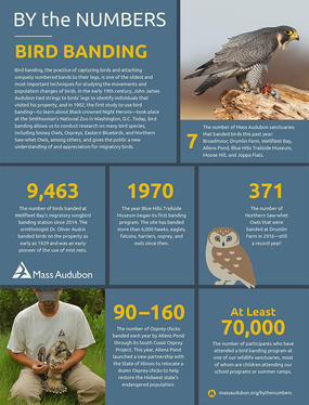 By the Numbers - Bird Banding