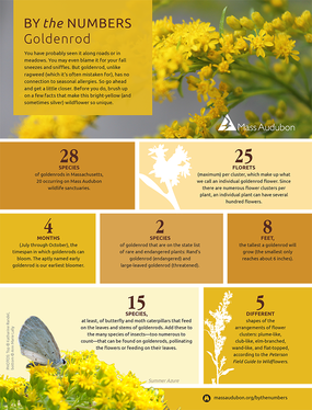 By the Numbers - Goldenrod