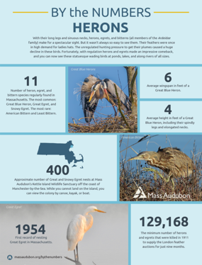 By the Numbers - Herons