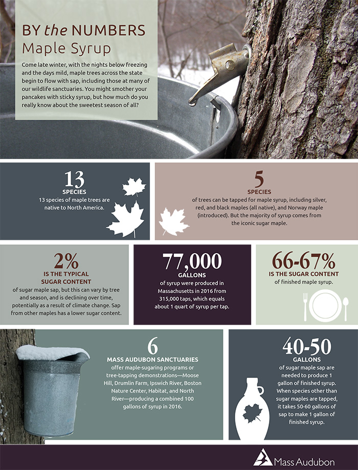 By the Numbers: Maple Sugaring
