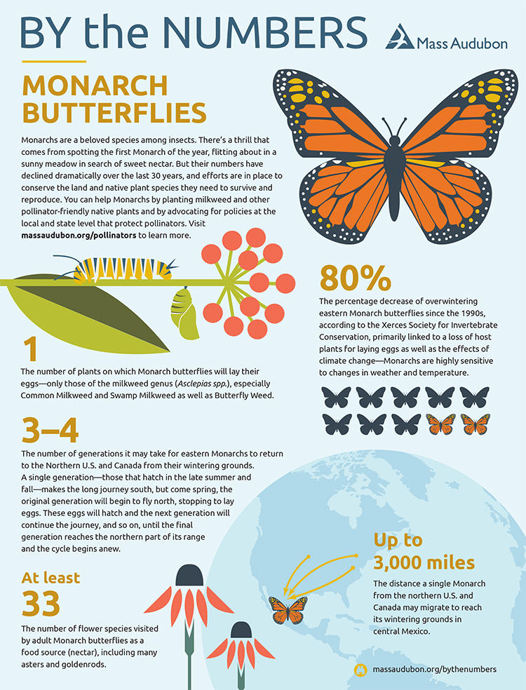 By the Numbers - Monarch Butterflies