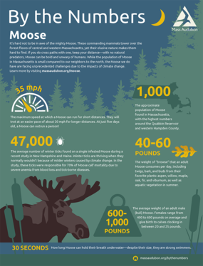 By the Numbers - Moose