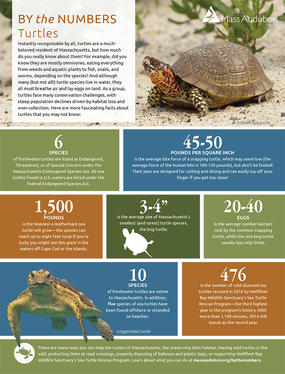 By the Numbers - Turtles