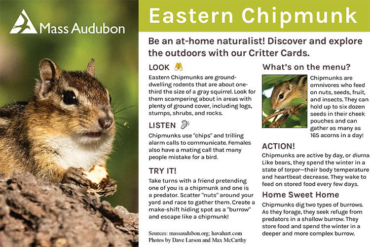 Critter Card — Eastern Chipmunk