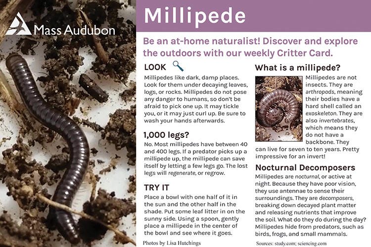 Critter Card – Millipede