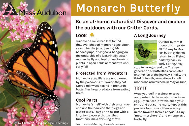 Critter Card — Monarch Butterfly