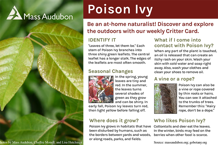 Critter Card — Poison Ivy