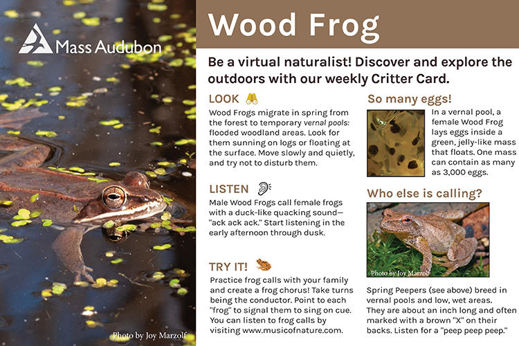 Critter Card — Wood Frog